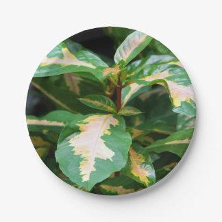 紙皿- Tricoloredの風刺漫画植物 ペーパープレート