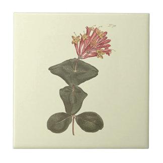 素晴らしいツキヌキニンドウの植物の絵 タイル