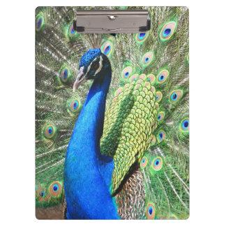 素晴らしい孔雀の写真 クリップボード