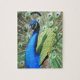 素晴らしい孔雀の写真 ジグソーパズル