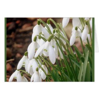 素晴らしい春Snowdrops カード