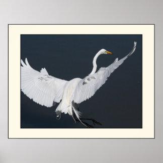 素晴らしい白鷺の着陸のプリント ポスター