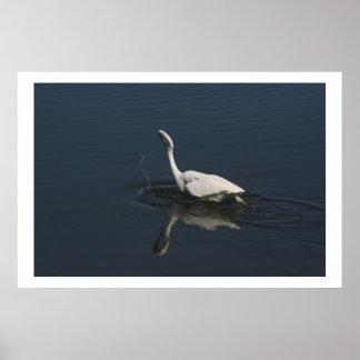 素晴らしい白鷺の魚釣りのプリント ポスター