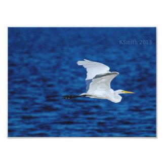 素晴らしい白鷺飛行 フォトプリント