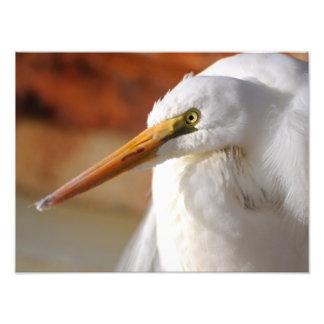 素晴らしい白鷺 フォトプリント