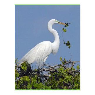 素晴らしい白鷺、フロリダの郵便はがき ポストカード