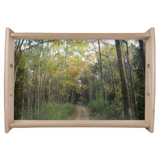 素晴らしい秋の森林道 トレー