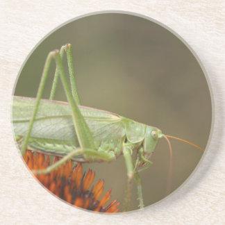 素晴らしい緑のブッシュコオロギ(Tettigoniaのviridissima) コースター