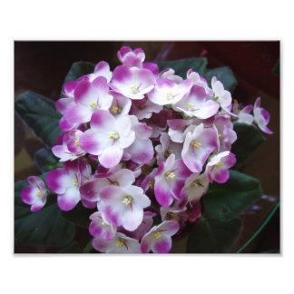 素晴らしい花のプリント フォトプリント