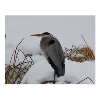 素晴らしい青鷲の冬 ポストカード