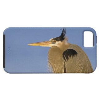 素晴らしい青鷲、Ardeaのherodias、大人、 iPhone SE/5/5s ケース