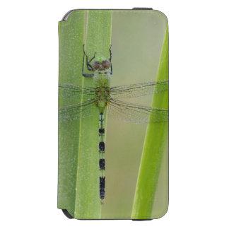 素晴らしいPondhawkのErythemisのvesiculosa、大人 Incipio Watson™ iPhone 6 ウォレットケース