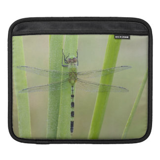 素晴らしいPondhawkのErythemisのvesiculosa、大人 iPadスリーブ