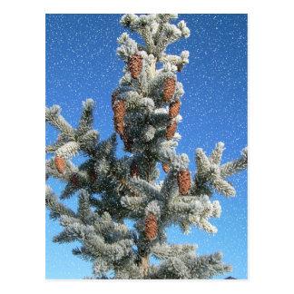 素朴な国のクリスマスの雪のpineconeのpinetree ポストカード