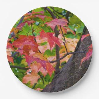 素朴な秋の結婚式は秋の群葉の写真を着色します ペーパープレート