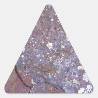 素朴な花こう岩の乾燥された地衣のコケパターン 三角形シール