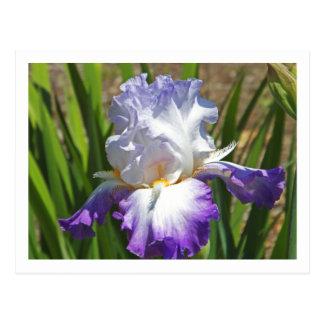 紫色および白いアイリスが付いている誕生日の郵便はがき ポストカード