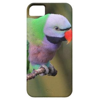 紫色および緑のインコとのiPhone 5の場合 iPhone SE/5/5s ケース