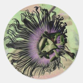 紫色および緑の情熱の花の開花 ラウンドシール