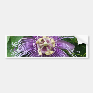 紫色および緑情熱の花 バンパーステッカー