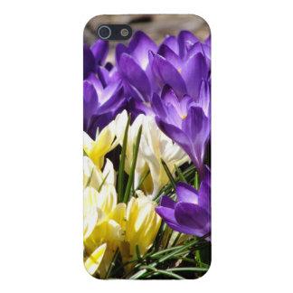 紫色および黄色のクロッカス2のiPhone 5の箱 iPhone 5 ケース