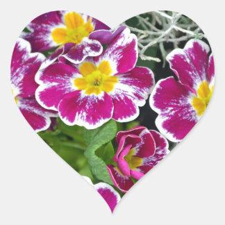 紫色および黄色のサクラソウの花 ハートシール