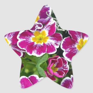 紫色および黄色のサクラソウの花 星シール