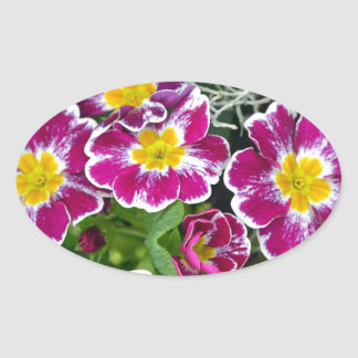 紫色および黄色のサクラソウの花 楕円形シール