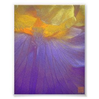 紫色および黄色の花のラプソディ フォトプリント