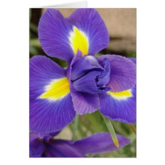 紫色および黄色の花-アイリス カード