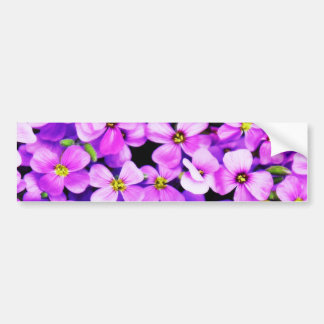 紫色によってはバンパーステッカーが開花します バンパーステッカー