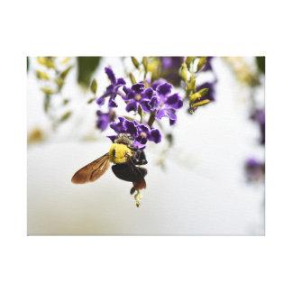 紫色ののまわりにによってはクイーンズランドオーストラリアが開花します キャンバスプリント