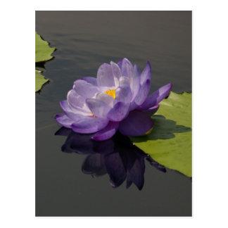 紫色のはす《植物》スイレンの郵便はがき ポストカード