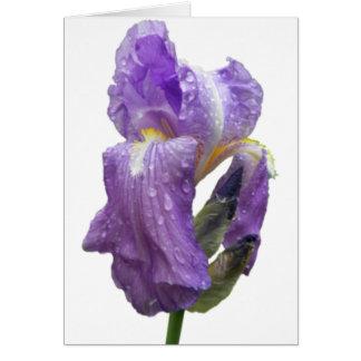 紫色のアイリス写真 カード