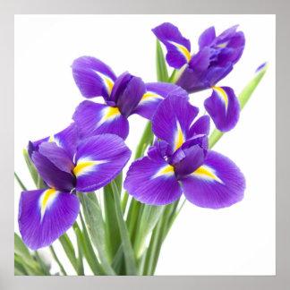紫色のアイリス花 ポスター