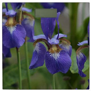 紫色のアイリス花 体重計