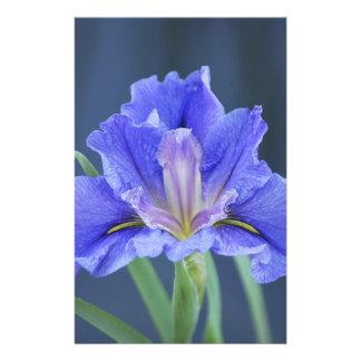 紫色のアイリス花 便箋