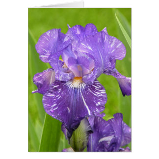 紫色のアイリス ノートカード