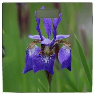 紫色のアイリス 体重計