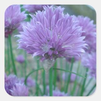 紫色のアサツキの花 スクエアシール