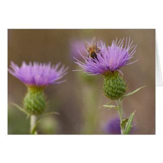 紫色のアザミの写真の働き者 カード