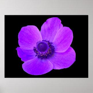 紫色のアネモネPostyer ポスター