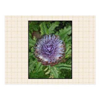 紫色のアーティチョークの花。 ベージュ点検 ポストカード