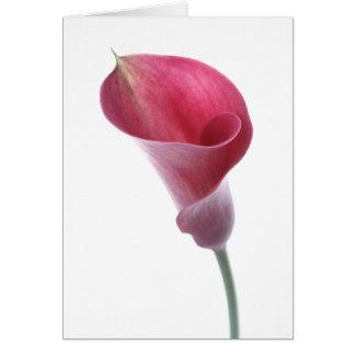 紫色のオランダカイウユリカード カード