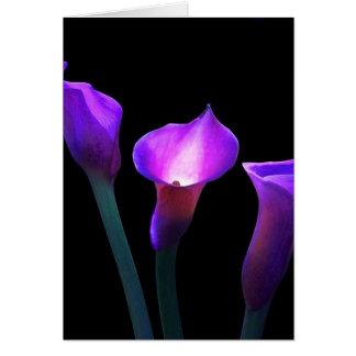 紫色のオランダカイウユリ カード