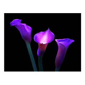 紫色のオランダカイウユリ ポストカード