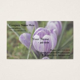 紫色のクロッカスの花、番红花 名刺
