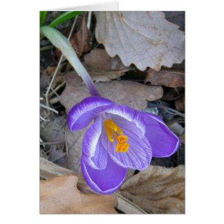 紫色のクロッカス カード