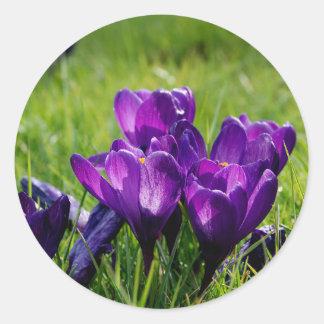 紫色のクロッカス ラウンドシール