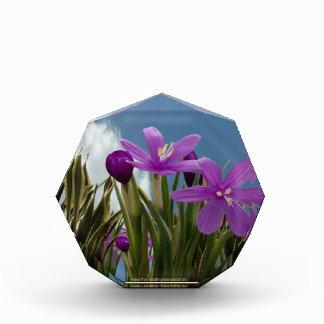 紫色のクロッカス 表彰盾